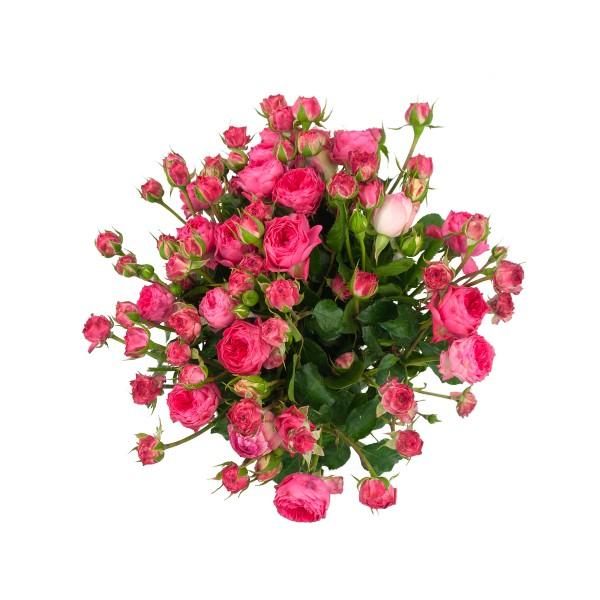 Bio Rosenstrauß Pur Größe L rosa