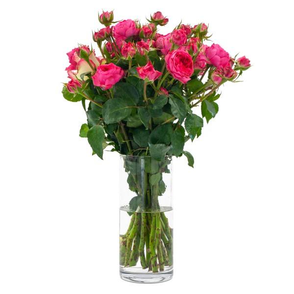 Bio Rosen PUR rosa