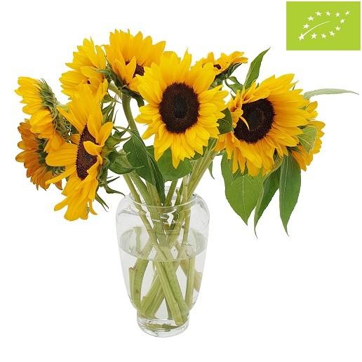 Bio Sonnenblumen PUR