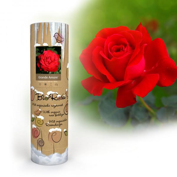 """Bio Rose """"Grande Amore"""""""